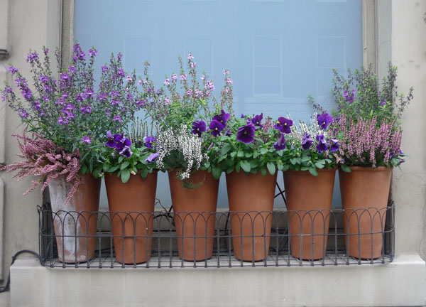 Pansies and heather