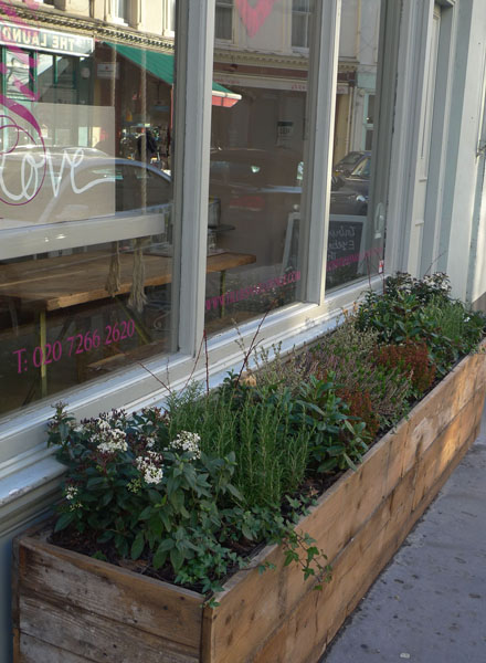 Raised beds containing evergreens outside Tillie's Nail Bar