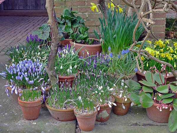 Pots at Great Dixter