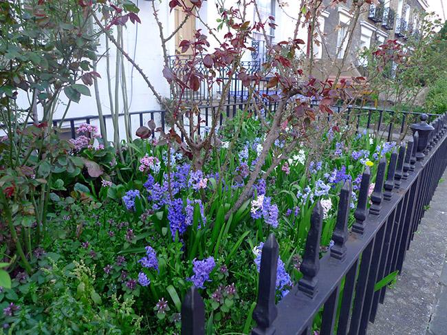 Hyacinths in Lambeth