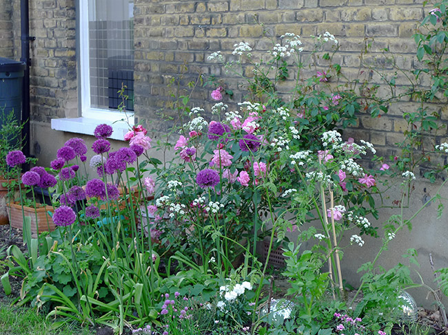 Chelsea-style planting in Finsbury Park