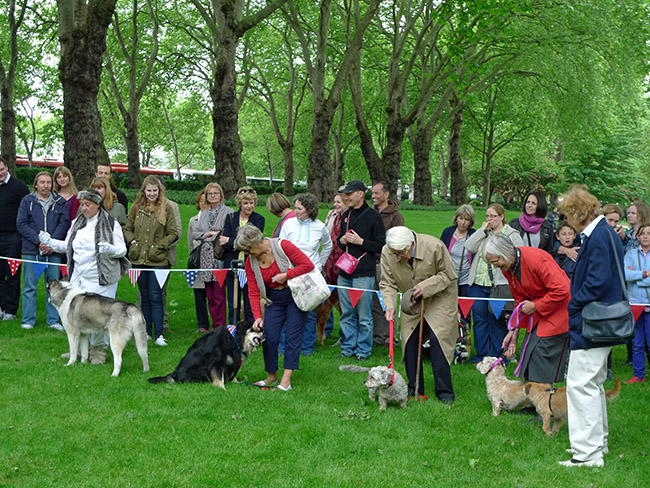 Inner Temple Chelsea Fringe dog show