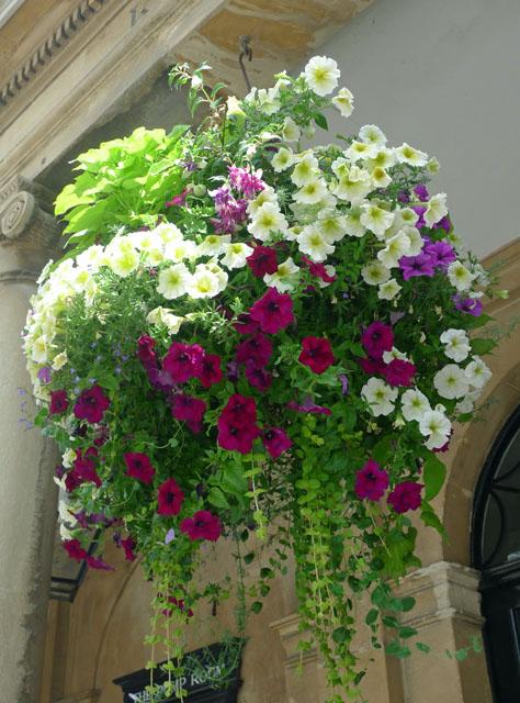 Hanging basket in Bath