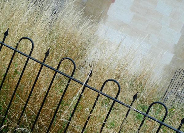 Grassandstone