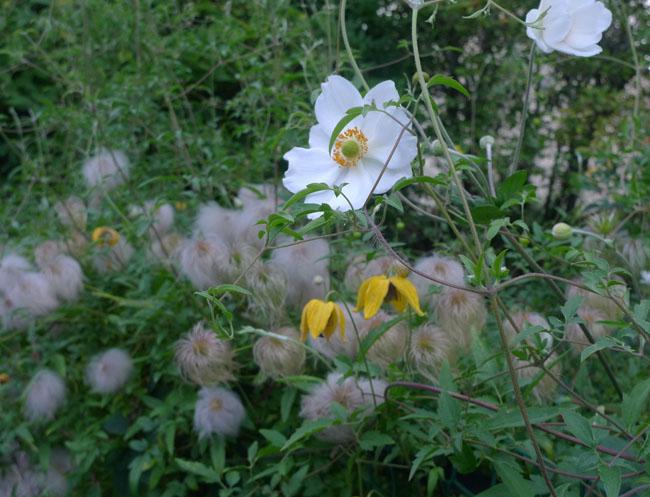 anemone+clematis_edited-1