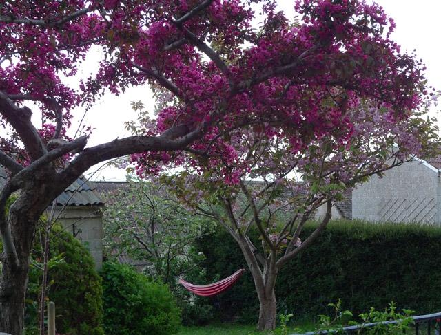 Bradford hammock