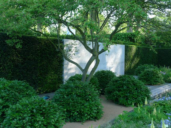 Amelanchier canadensis in Laurent Perrier garden