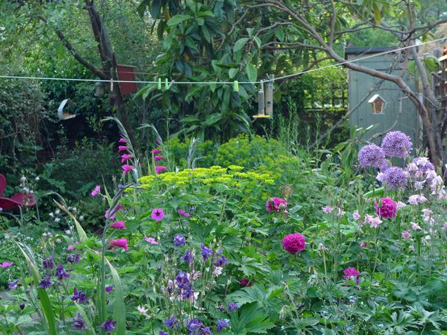 Naomi's-garden