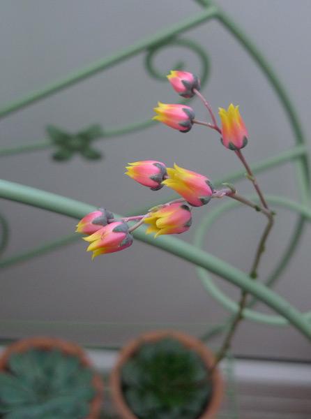 Succulents2