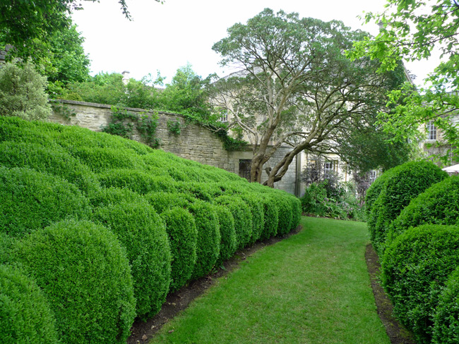 cloudpruned-hedge2