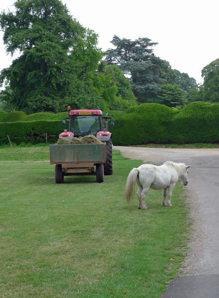 Forde-Abbey-horse