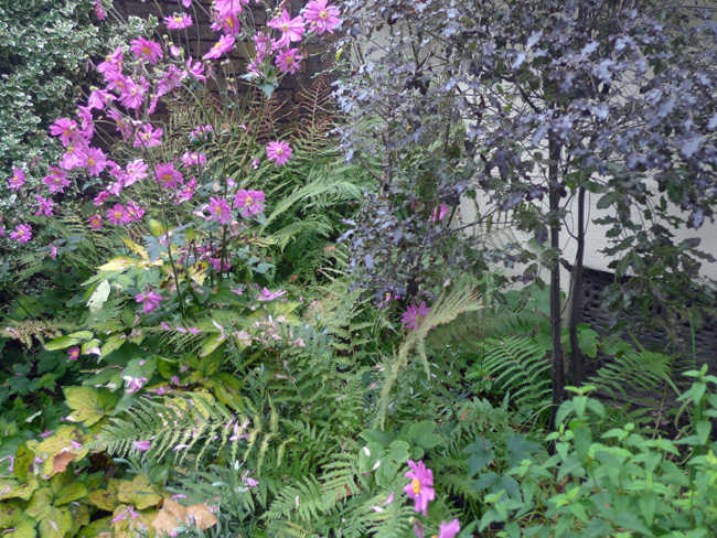Ferns and Japanese anemones