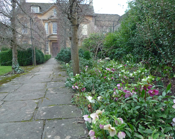 Hellebores at the Courts Garden, Wiltshire