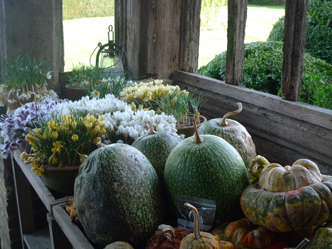 Display of crocus and gourds at Great Dixter