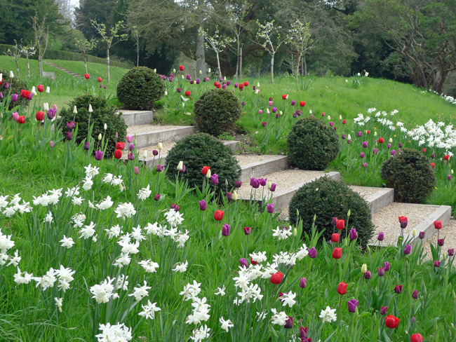 Arundel Tulips-by-steps