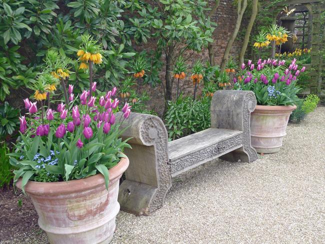 Arundel-tulips-in-pots2