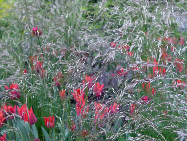 Tulips-and-grasses at the RHS Chelsea Flower Show