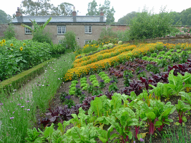 The veg garden at Trengwainton, Cornwall