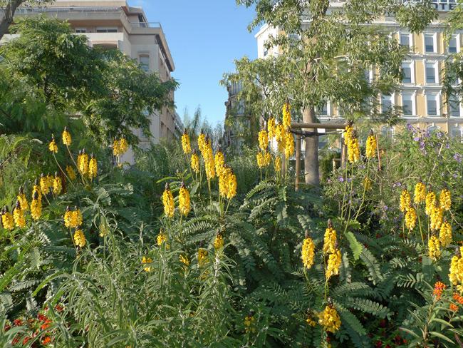 Nice-yellow-flowers