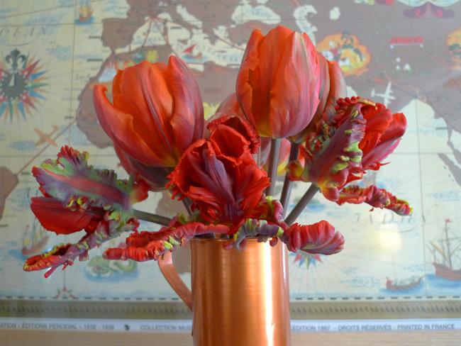 Tulip 'Orange Favourite' and Tulip 'Rococo'
