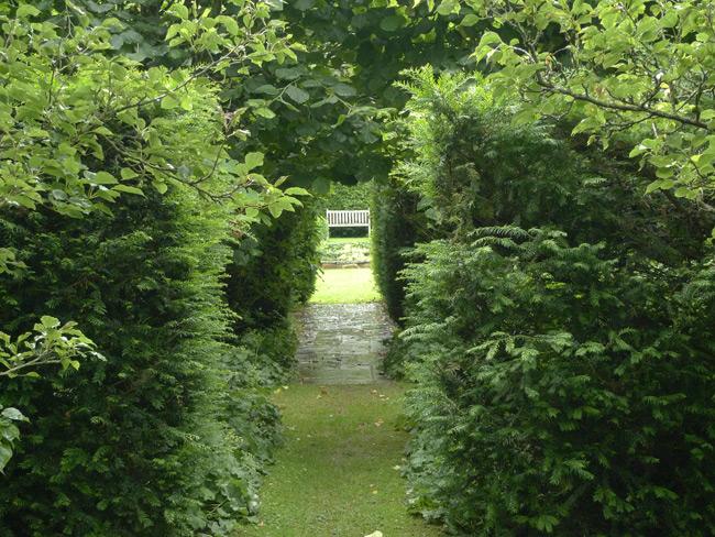 Bryans-hedges-view